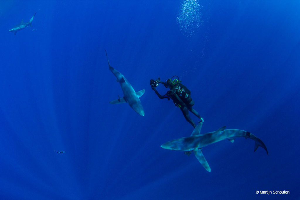 DIVE THE AZORES