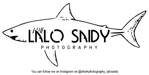 ALAO SANDY Shark